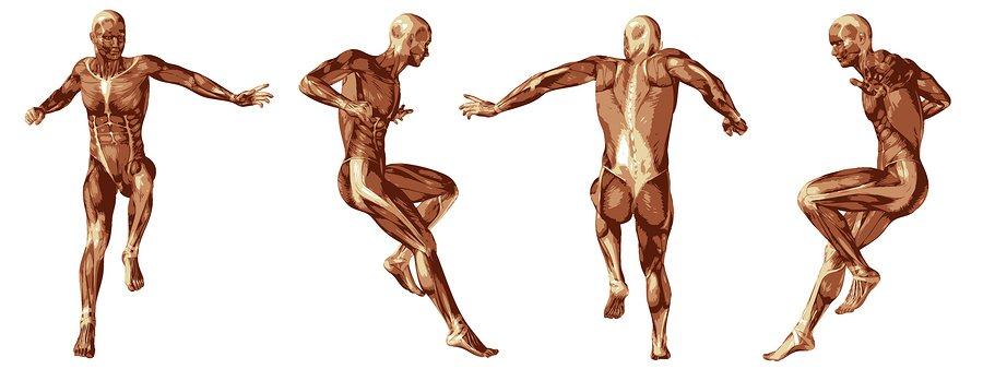 anatomía aplicada al masaje thai